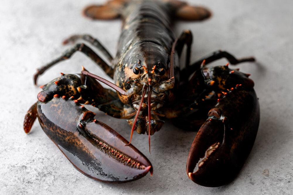 Lobster Fra Diavlo-10.jpg