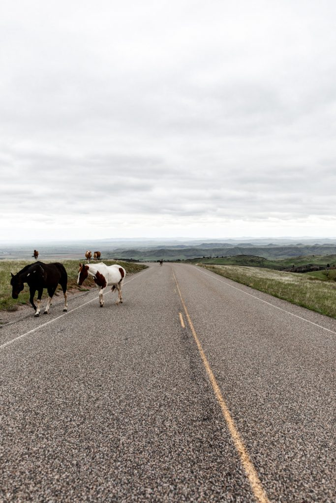 wild horses Fort Smith Montana