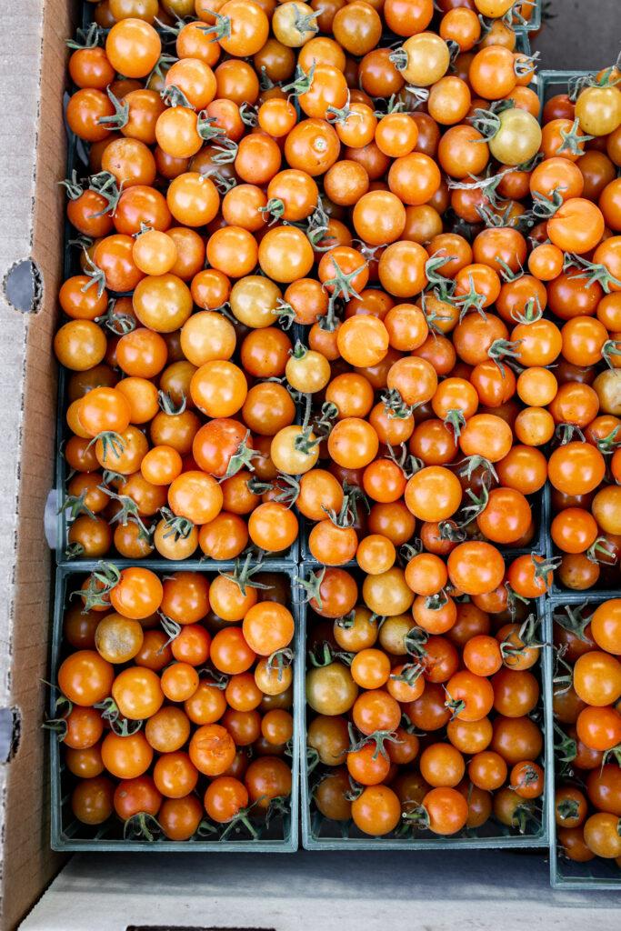 21 Recipes Using Juicy Summer Tomatoes