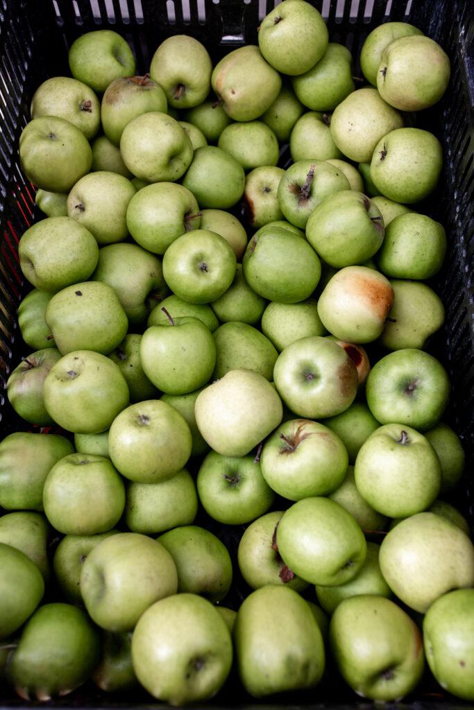 apple recipes from bushel of green granny smith apples